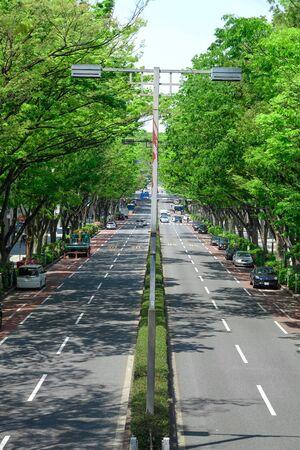 Tree-lined trees in Omotesando