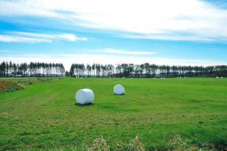 Barley culms roll of the ranch in Kamishihoro Town, Hokkaido