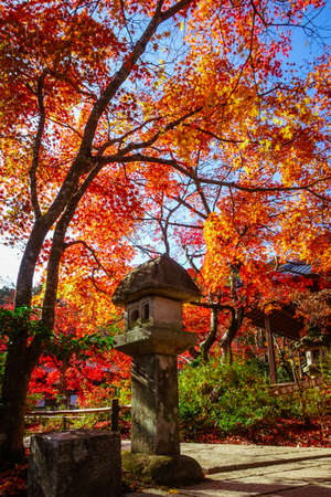 jakko-ji temple, Kyoto,  with autumn leaves (stone lanterns next to Niomon Gate)