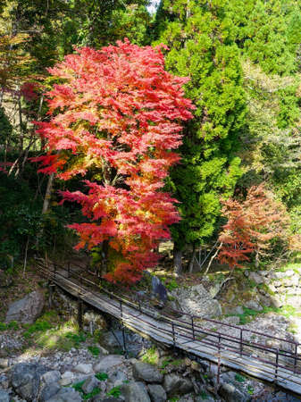 River in Yufu City, Oita with autumn leaves Standard-Bild