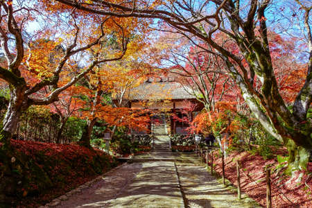 Jojakkoji Temple, Kyoto,  with autumn leaves   (Niomon Gate)