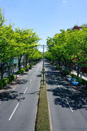 Omotesando, fresh green keyaki trees (zelkova trees)