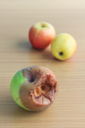 rotten green apple and fresh pink apple photo