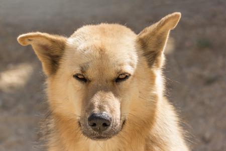 canny: thai dog in a warm day