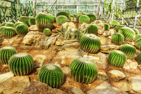Group of cactus plant in greenhouse