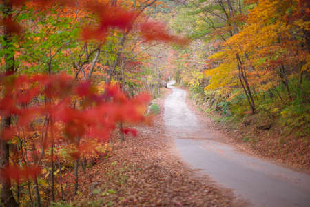 A quiet forest road