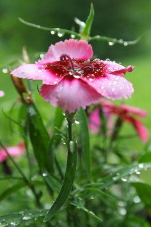 flower after shower