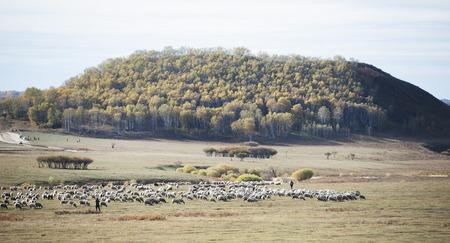 Inner Mongolia grassland scenery 版權商用圖片