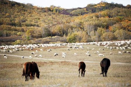 mongolia horse: Inner Mongolia grassland scenery Stock Photo