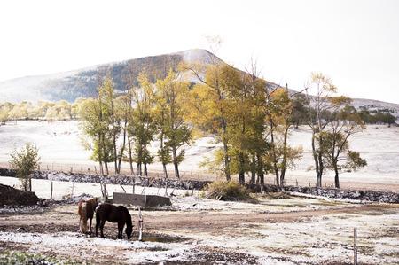 hebei: Hebei snowy scenery