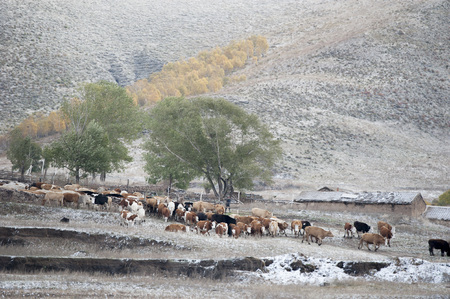 hebei: Pasture farm of Hebei province in winter Stock Photo