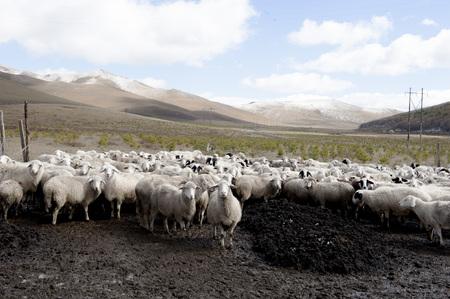 rural area: Pasture farm in Hebei rural area