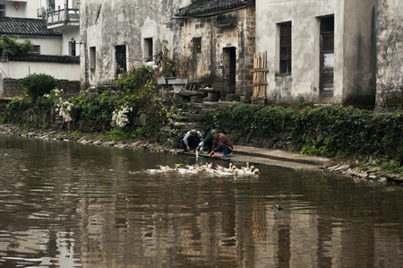 villagers: Villagers cleaning vegetables at the river side Editorial