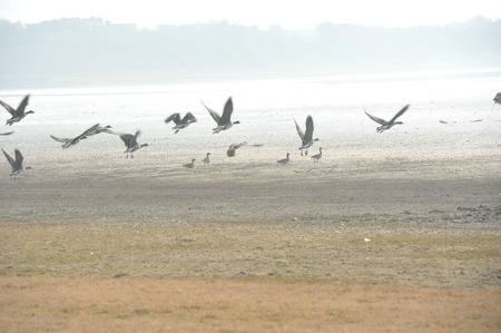 migratory birds: Shengjin Lake flocks of migratory birds fly Stock Photo