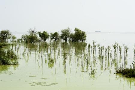 wetland: Luxi wetlands of chaohu Lake blue-green algae