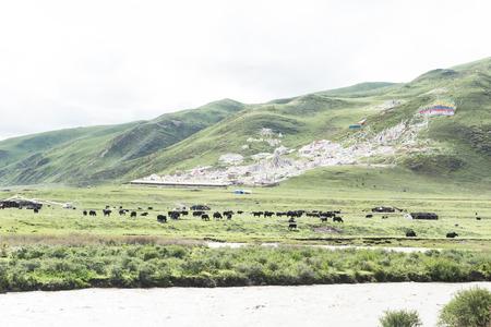 sichuan: Sichuan Ganzi: rtar scenery picture