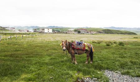 sichuan: Ganzi Sichuan grassland scenery