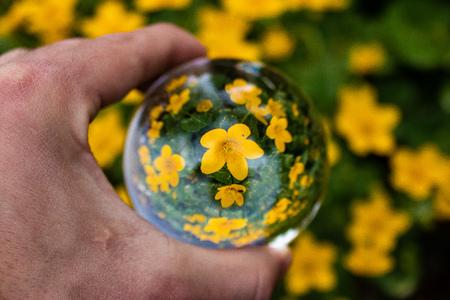 Glass ball - crystal ball flower 免版税图像