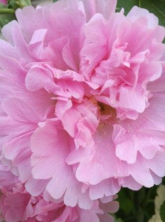 leisurely: Flowers in bloom