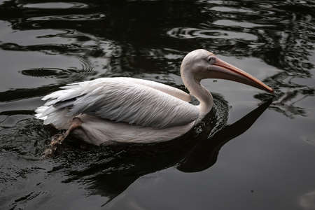 animal pouch: Pelican
