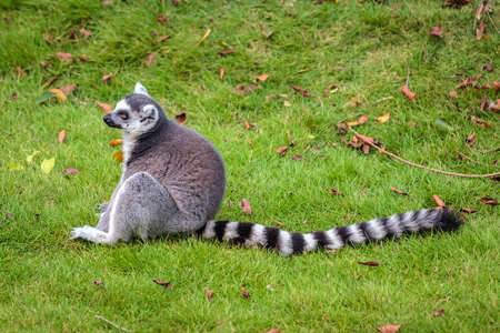raccoons: Coon