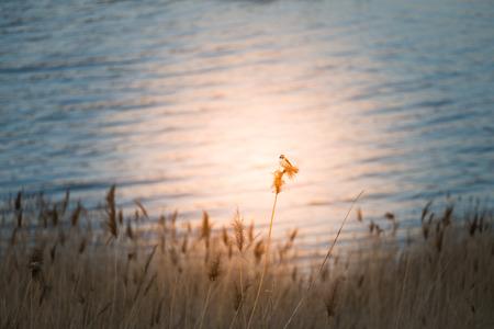 Urumqi Lake with bird Imagens - 96686702