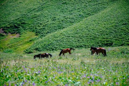 Urumqi grassland with horses Imagens - 96686857