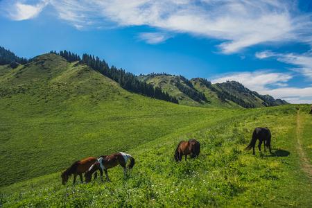 Urumqi grassland with horses 스톡 콘텐츠