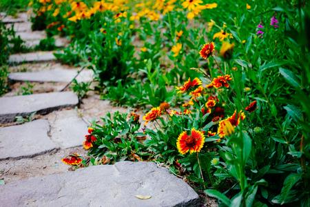 wildflower Imagens - 96686991