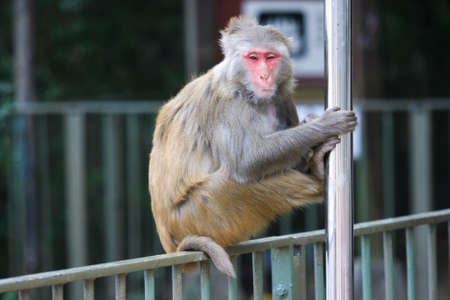 crouch: Monkey