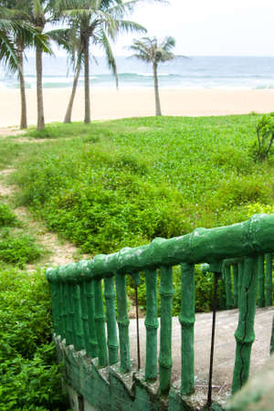 vegetation: Beach vegetation