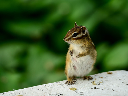 popular science: Little squirrel