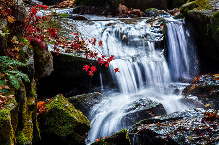 red maple leaves with waterfall