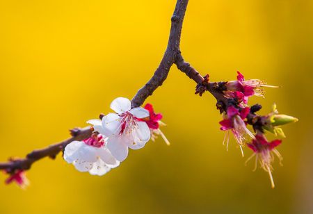 hebei province: The blossoms