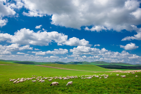 Grassland with blue sky, beautiful background. Stock Photo