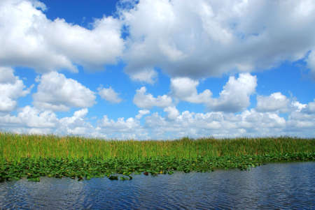 Puffy white clouds in a blue sky over plants, reeds and water of the Florida Everglades.