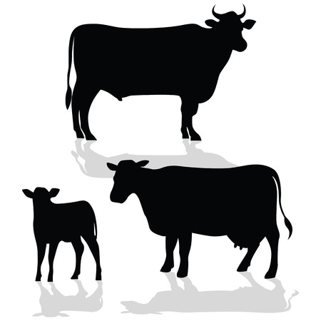 hoofed mammal: Illustration of cow family with their shadow.