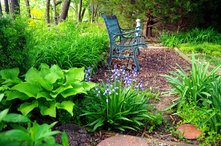 Peaceful sitting area with bench at woods edge Stock Photo