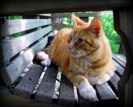 Little Doc the orange tabby cat relaxing on the swing