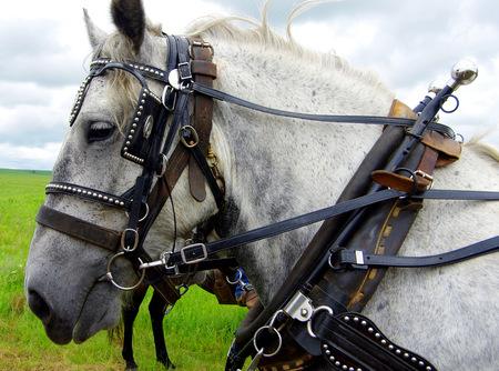 Draft horses in the Kansas prairie Banco de Imagens
