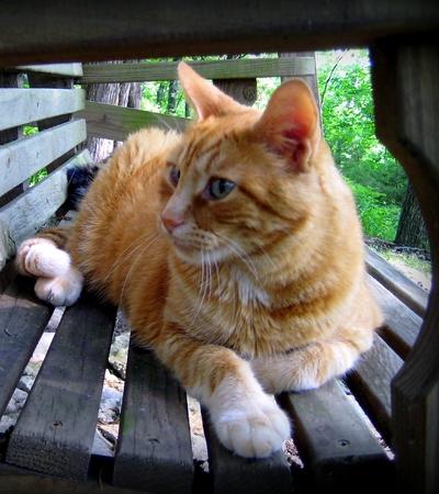 Little Doc an orange tabby cat relaxing on a swing