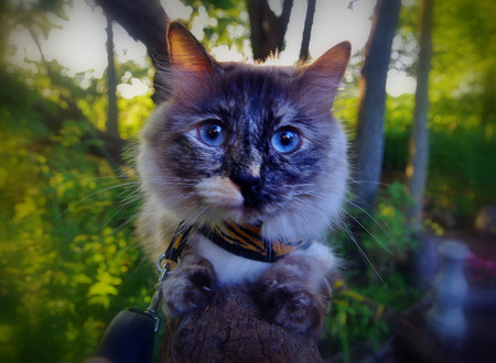 Powder Puff loving the outdoors