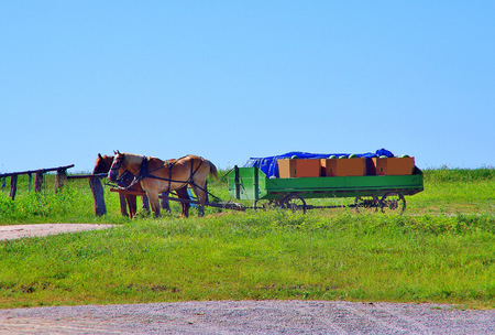 Draft horses pulling a wagon loaded with crop