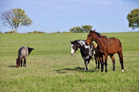 Peaceful scene of horses grazing in a field