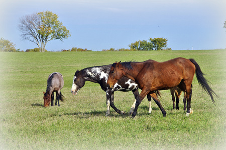 Three horses playing in the grassland Banco de Imagens