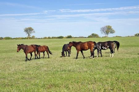 Horses on a ranch in Kansas Banco de Imagens