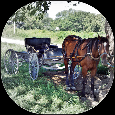 Horse and buggy tied to a tree