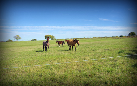 Beautiful landscape of a field with horses playing