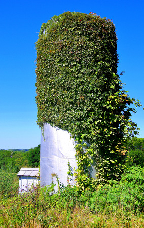 A silo overgrown with vines