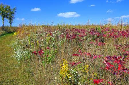 Beautiful Prairie Center near Olathe Kansas in October